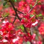 Кусты с розовыми цветами