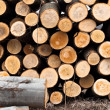 Stock Photo: Fresh logs of wood piled up