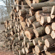 A stack of wooden logs — Foto Stock