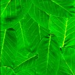 Stock Photo: Vibrant green leaves piled up