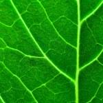 Fresh green leaf texture — Stock Photo #5684343