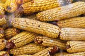 Suchej kukurydzy tekstur — Zdjęcie stockowe