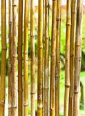 Yeşil bulanık arka plan bambu — Stok fotoğraf