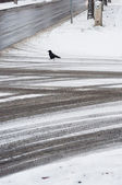 Tire track on the road covered by snow with crow at winter — Stok fotoğraf