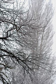 Winter trees with frozen ice cristals and with blurry background — Stock Photo