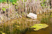 Polluted water with paper box — Stockfoto