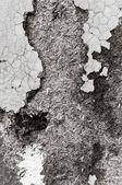 黒と白で、放棄された木製の背景 — ストック写真