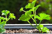Fresh green plant in pot — Stock Photo