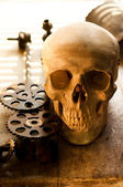 Cogs taken out from human skull for further inspection — Stock Photo