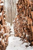 積み上げ木製 loges は雪で覆われて — ストック写真