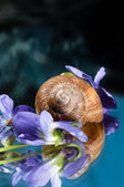 Shell of a snail with purple flowers around it — Stock Photo