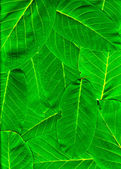 Vibrant green leaves piled up — Stock Photo