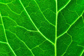 Fresh green leaf texture — Stock Photo
