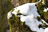 Moss covered by snow on rocks — Stock Photo