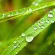 Green grass with water drops on it — Stock Photo