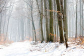 Winter Landscape of a forest in fog — Stok fotoğraf