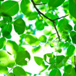 Stock Photo: Fresh green leafs with blurs
