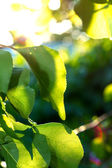 Fresh green leaves against blurry background — Stock Photo