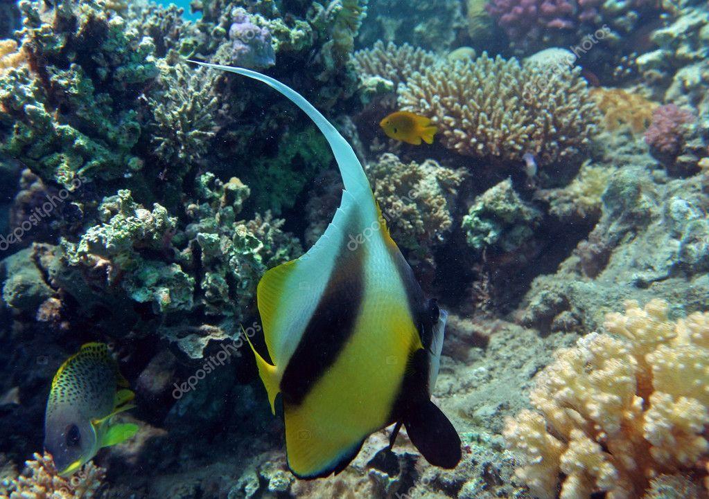 рыбалка на коралловую рыбу