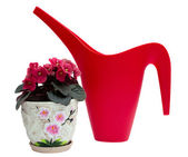 Watering can and flower in a pot — Stock Photo
