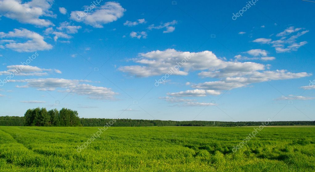 Track in the field against the blue sky  Stock Photo #5799581