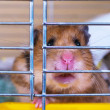 A hamster in a cage — Stock Photo