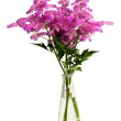 Bouquet of pink flowers in vase isolated on white background — Stock Photo #6073052