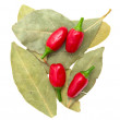 Laurel leafs, hot pepper  on white background — Stock Photo