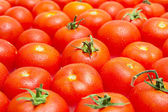 Multitude of tomatoes close-up view — Stock Photo