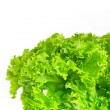 Royalty-Free Stock Photo: Green leaves lettuce isolated on white