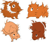 Guinea pigs — Stock Vector