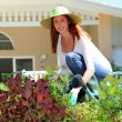 Beautiful woman planting flowers in garden - Stockfoto