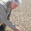 Agronomist working in wheat field - Stock Photo