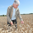 Agronomist working in wheat field — Stock Photo