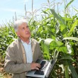 Agronomist in corn field - ストック写真