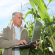 Stock Photo: Agronomist in corn field