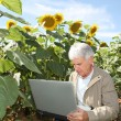 Agronomist in sunflowers field - Stock Photo