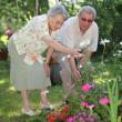Elderly couple in garden — Stock Photo