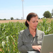 Agronomist in corn field — Stock Photo #6702829