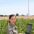 Agronomist in corn field — Stock Photo
