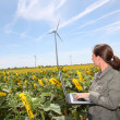 Agronomist in sunflowers field — Stock Photo