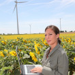 Agronomist in sunflowers field — ストック写真
