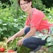 Senior woman in kitchen garden — Stock Photo #6703067