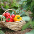 Basket of fresh vegetables — Stock Photo #6703082
