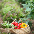 Basket of fresh vegetables — Stock Photo #6703083