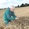 Stock Photo: Farmer in wheat field