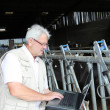 Breeder in barn with computer — Stock Photo