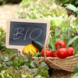 Stock Photo: Basket of organic vegetables