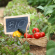 Basket of organic vegetables — Stock Photo