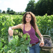 Beautiful woman harvesting grapes — Stockfoto #6705042